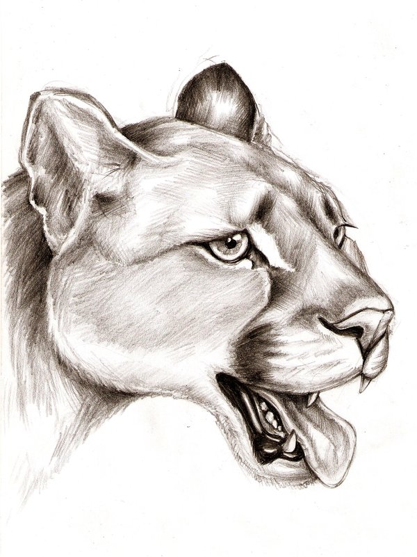 animal drawings amazing deviantart leidenschaften source