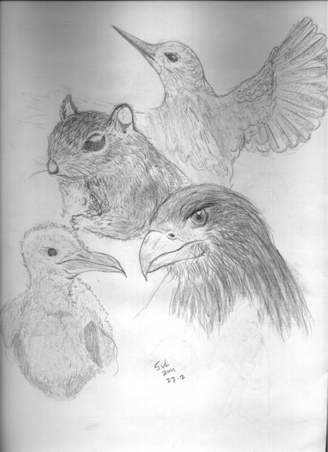 Animals_by_SVL