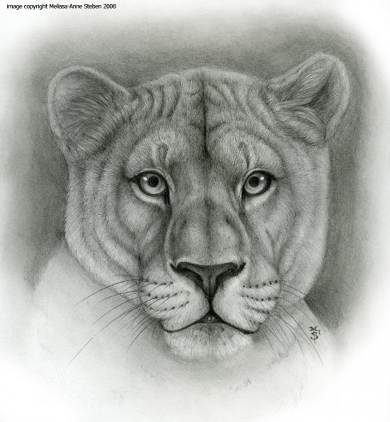 Lioness_Animal_Symbolism_by_Art_of_Sekhmet
