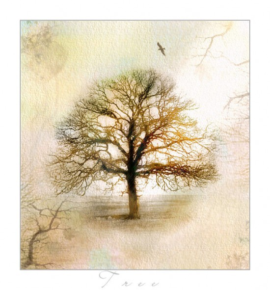 _Tree__by_Edonist_Girl