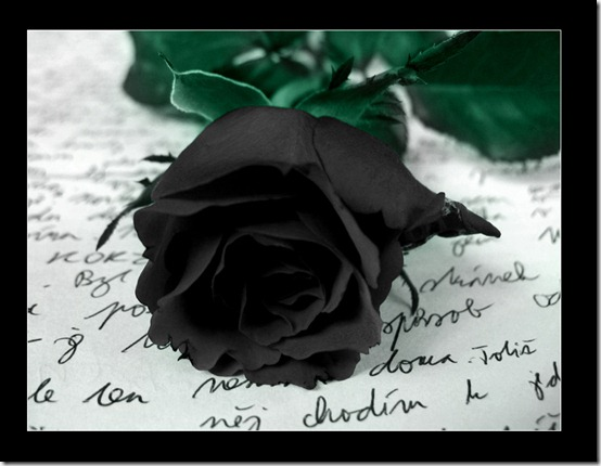Black Rose by Ketmara thumb 30 Beautiful Photoshoped Roses That Are Made By Romantic Designers