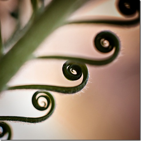 Curls 2 by drkshp thumb 80 Extraordinary Examples Of Macro Photography