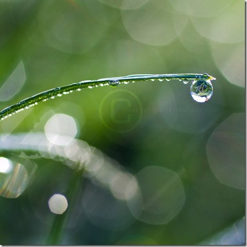 Dewdrop Dreams by eyedesign thumb 80 Extraordinary Examples Of Macro Photography