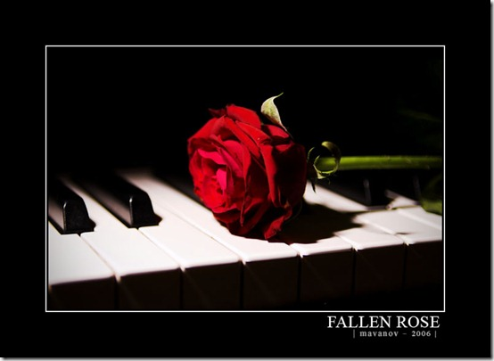 Fallen Rose by Marienvo thumb 30 Beautiful Photoshoped Roses That Are Made By Romantic Designers