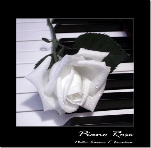 Piano rose by Titanica thumb 30 Beautiful Photoshoped Roses That Are Made By Romantic Designers
