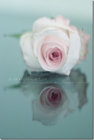 RoSe   by SaRoNeTa thumb 30 Beautiful Photoshoped Roses That Are Made By Romantic Designers