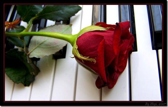 Rose On Piano by yhdenenkelinunelma thumb 30 Beautiful Photoshoped Roses That Are Made By Romantic Designers