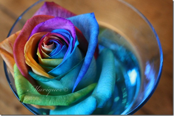 Rose by Mariquez thumb 30 Beautiful Photoshoped Roses That Are Made By Romantic Designers