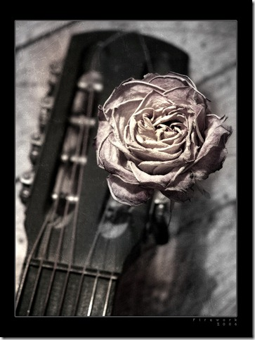 Rose by firework thumb 30 Beautiful Photoshoped Roses That Are Made By Romantic Designers