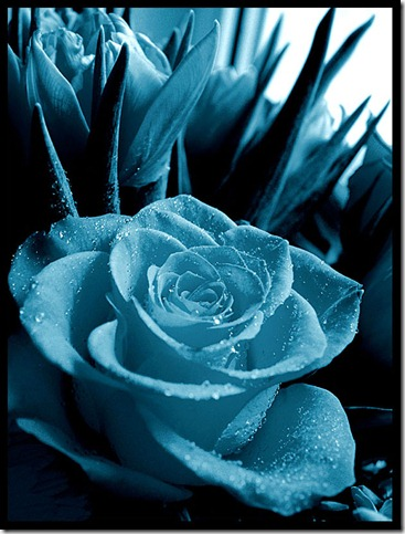 Rose for mony by ssilence thumb 30 Beautiful Photoshoped Roses That Are Made By Romantic Designers