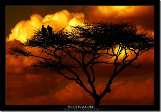 Sunset_Boulevard_by_Tonyryna