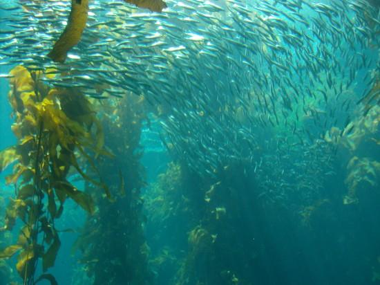 Underwater_8_by_greenaleydis_stock
