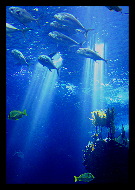 Underwater_Dream_II_by_nunovix