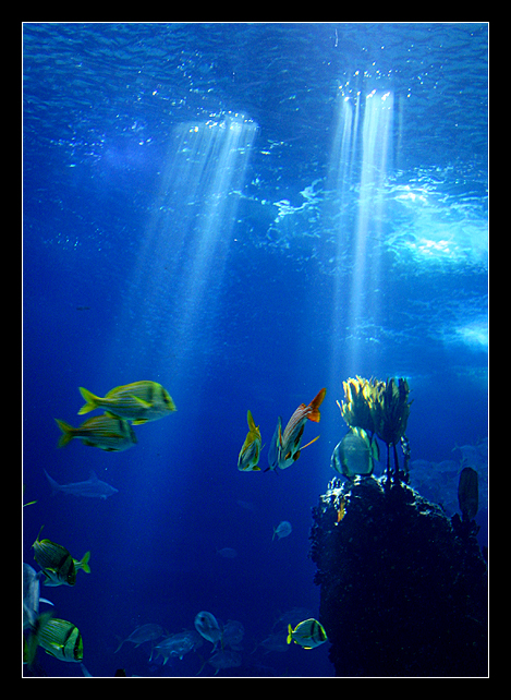 Underwater_Dream_by_nunovix