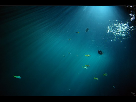 Underwater_Wallpaper_by_Alderman