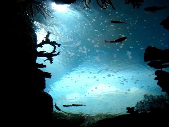 Underwater_by_AlluringIllusion