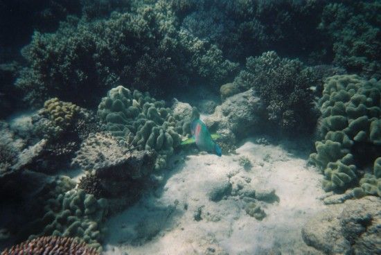 Underwater_by_CAStock
