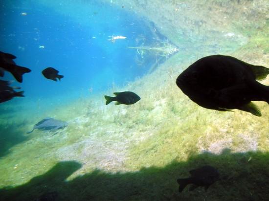 Underwater_by_JannaMarieisaTragedy