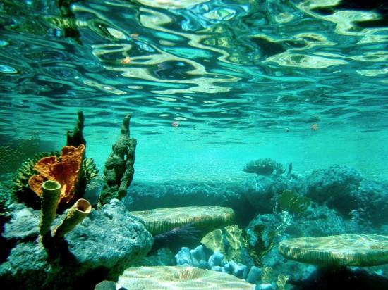 Underwater_by_alyssaioannou