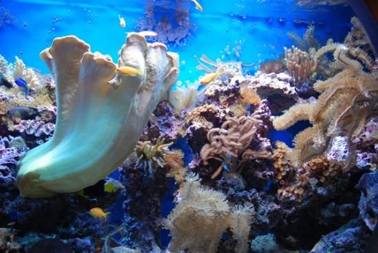 Underwater_by_stock_feele