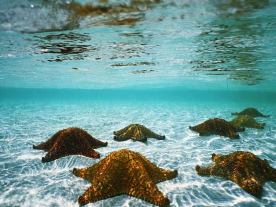 underwater_by_tiakaz
