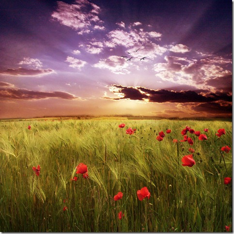 A beautiful day   by ZanaSoul thumb 50 Beautiful Examples Of Poppy Photography
