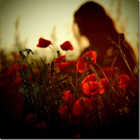 CCX   somewhere IV  by behherit thumb 50 Beautiful Examples Of Poppy Photography