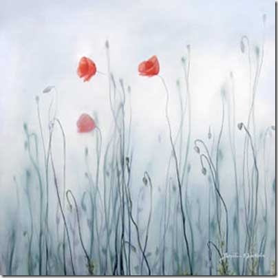 Frosty poppy flowers by Ele Art thumb 50 Beautiful Examples Of Poppy Photography
