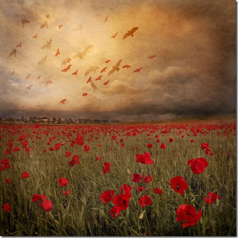 Landscape with red birds by Floriandra thumb 50 Beautiful Examples Of Poppy Photography