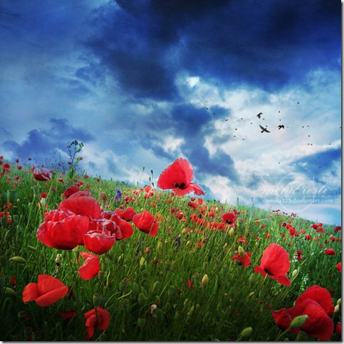 Last Spring  by moroka323 thumb 50 Beautiful Examples Of Poppy Photography