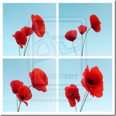 Les coquelicots du printemps by elmouna thumb 50 Beautiful Examples Of Poppy Photography