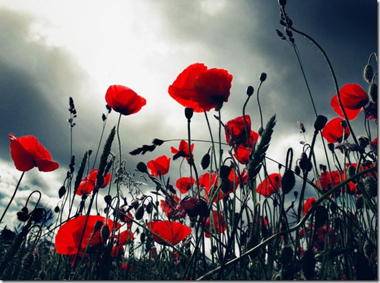 Poppy Storm by ilva R thumb 50 Beautiful Examples Of Poppy Photography