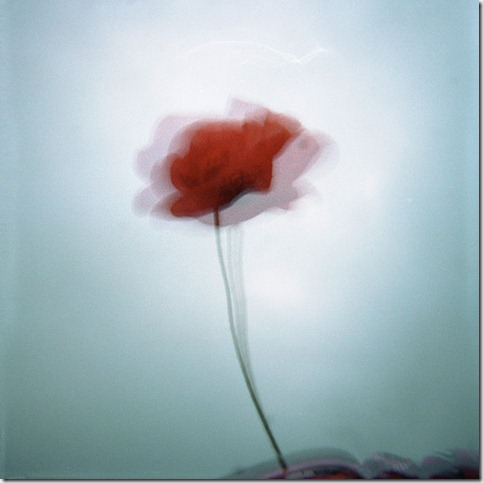 Un coquelicot dans ma culotte by mheuf thumb 50 Beautiful Examples Of Poppy Photography