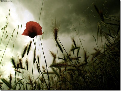 midsummer storm  by m0thyyku thumb 50 Beautiful Examples Of Poppy Photography