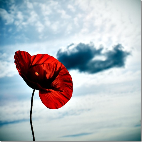 pop py art by meppol thumb 50 Beautiful Examples Of Poppy Photography