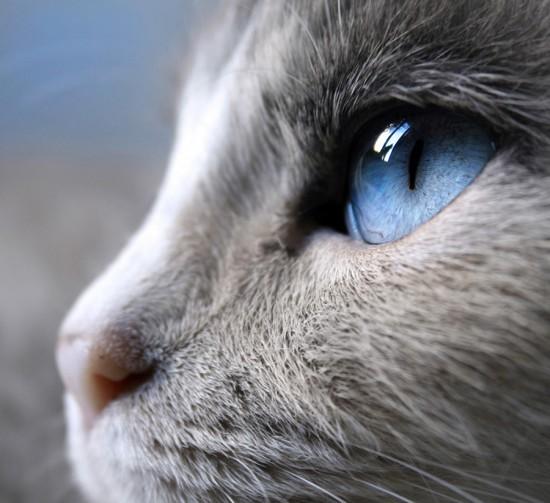 Blue_by_colors4mind