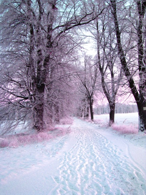 Snowy Road by patrolski 487x650 Road Perfection