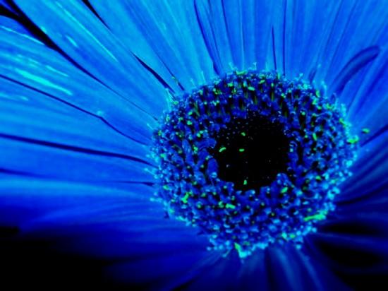 blue_by_maverick_t11