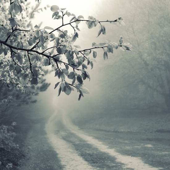 foggy road by leenik 550x550 Road Perfection