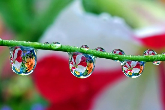 31 Beautiful Water Droplets