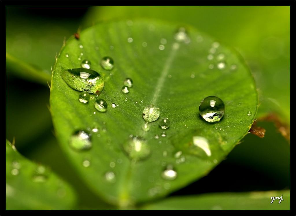 31 Beautiful Water Droplets