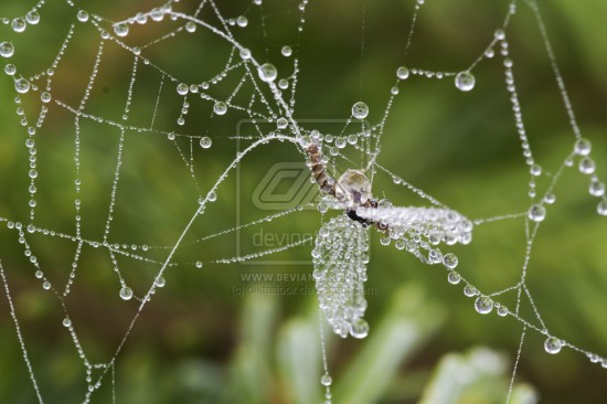 A net by diktattoor 550x366 31 Amazing Examples Of Spider Net Photography
