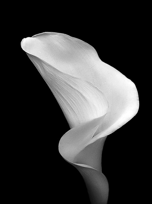 Black and White Cala by andras120 487x650 Stuning Black And White Photo Manipulations