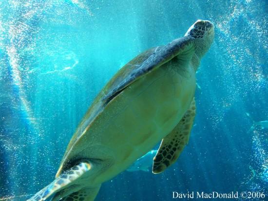 Giant-turte-sea-life-66344_1920_1440