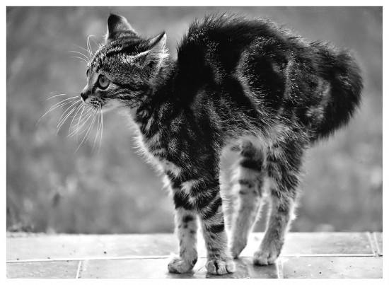 Kitty_In_Black_And_White_by_SuloinenEnkeli