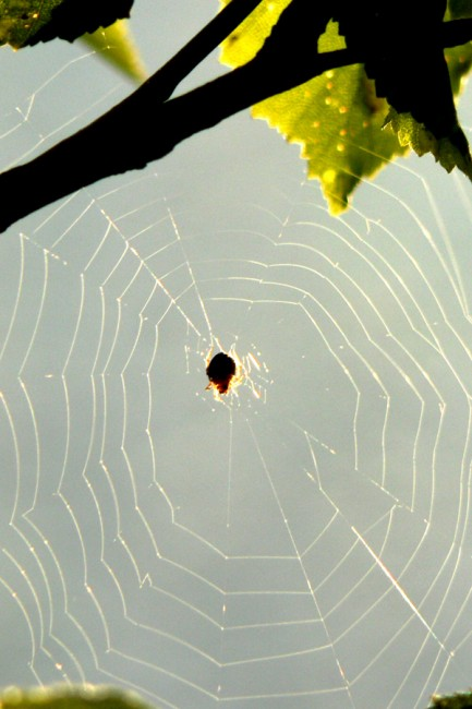 Spider and his net by OldEric 433x650 31 Amazing Examples Of Spider Net Photography