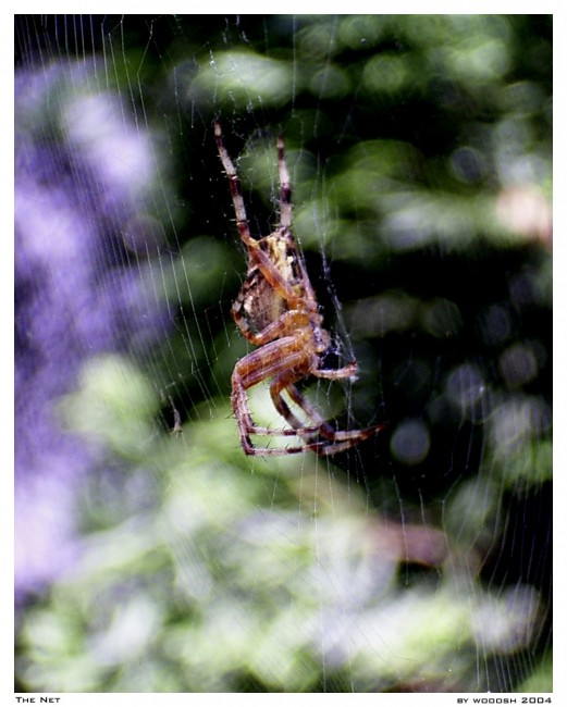 The Net 521x650 31 Amazing Examples Of Spider Net Photography