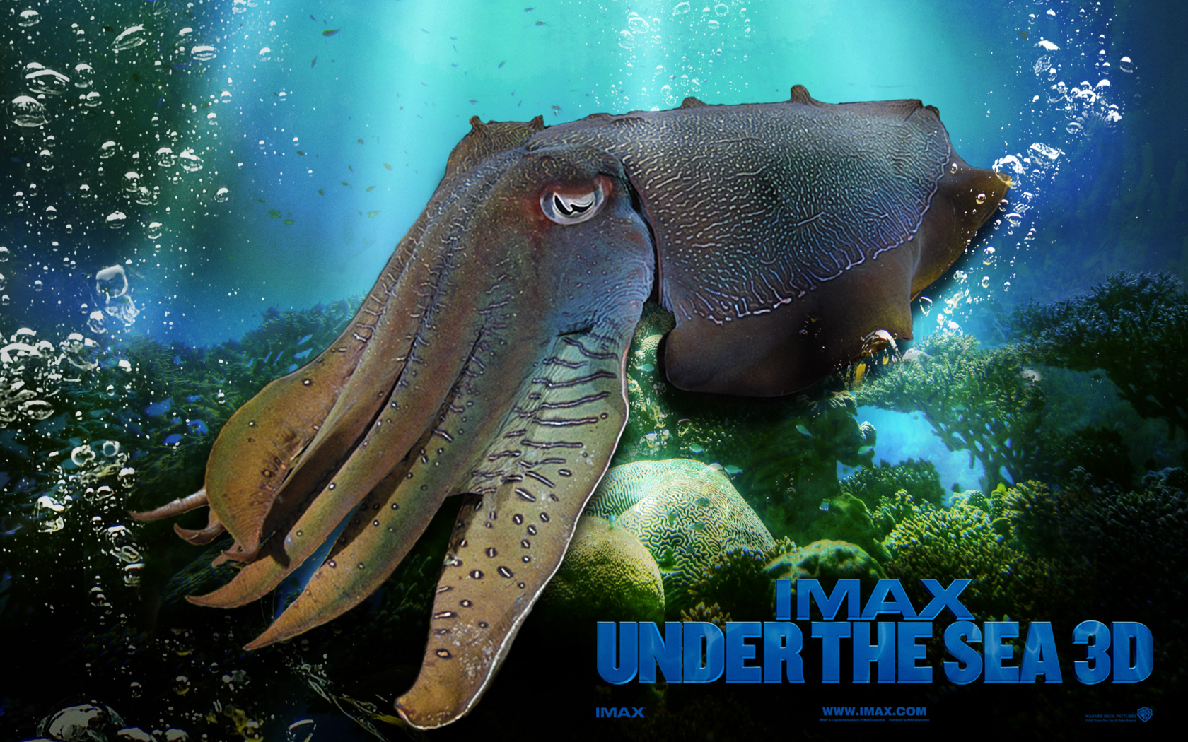 42 Under The Sea Wallpapers | Photo Collection - Graphics Arts ...