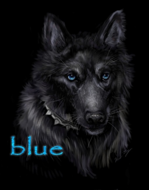 Wolf  s Rain Blue     by Miki  511x650 42 Well Painted Wolfs
