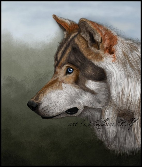 Wolf by Kuutulensudet 550x646 42 Well Painted Wolfs